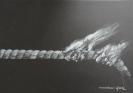 Verena Wackershauser, Triptychon (3/3) - 2012